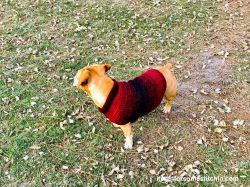 Quick and Easy Medium-size Dog Sweater