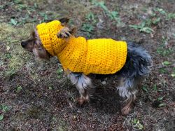 Small Dog Hoodie Sweater