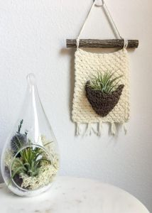 Rustic Air Plant Wall Hanger