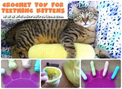 Cat Toy for Teething Kittens