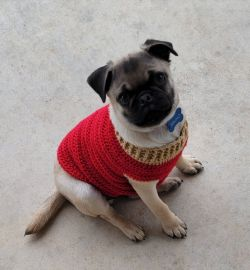 Pug Puppy Sweater