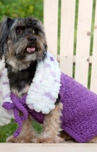 Purpleicious Dog Coat