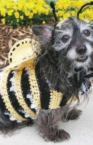 Dog's Crochet Bumble Bee Costume