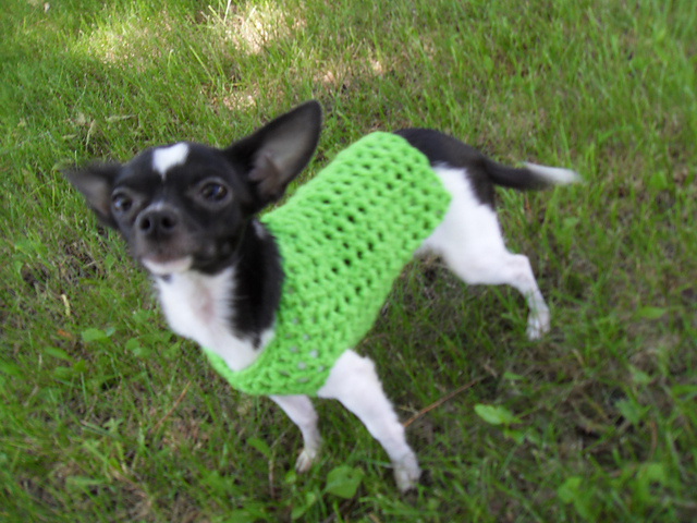 Crochet Patterns Galore Any Occasion Dog Sweater