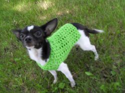 Any Occasion Dog Sweater